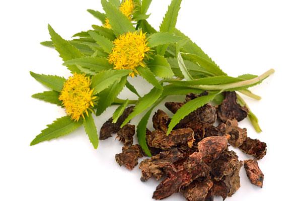 Rhodiola rosea: il potere degli antiossidanti per la cura dei capelli e della pelle