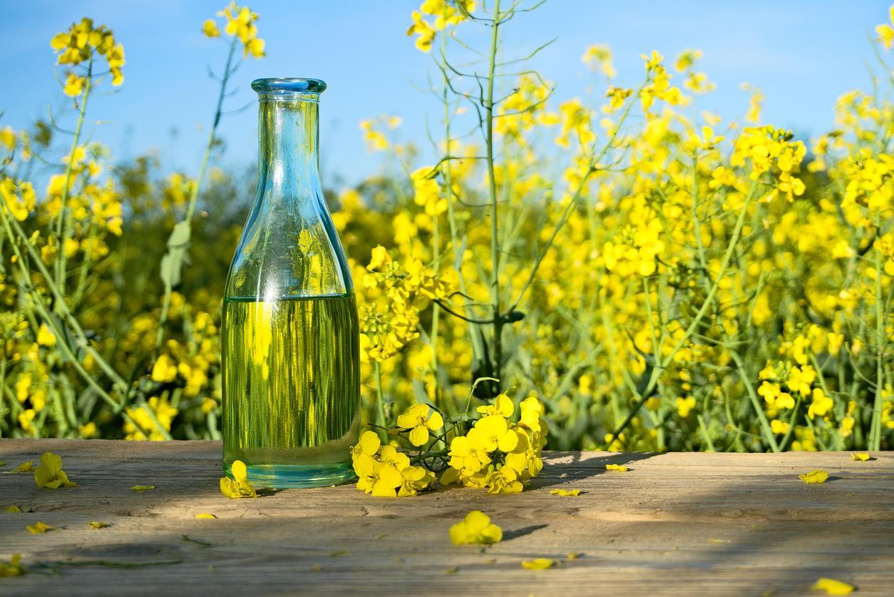 Olio di colza: usi cosmetici e proprietà